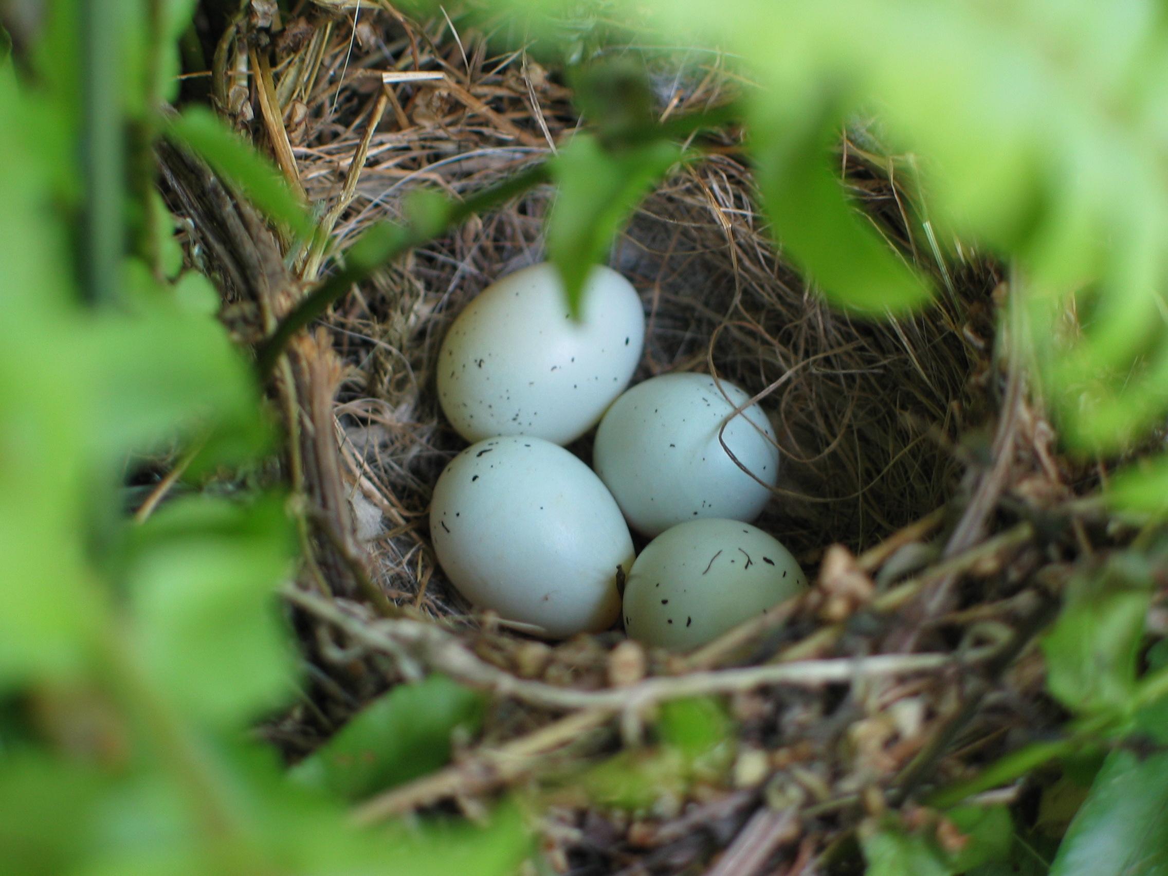 Empty Nest But Not Ready To Downsize?